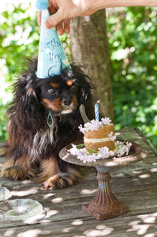 Puppy Celebrates First Birthday by Jill Chen for Stocksy United