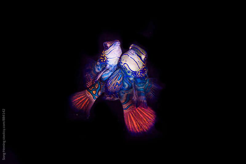 underwater love by Song Heming for Stocksy United