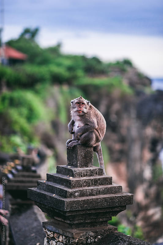 Monkey in the Temple by Alexander Grabchilev for Stocksy United