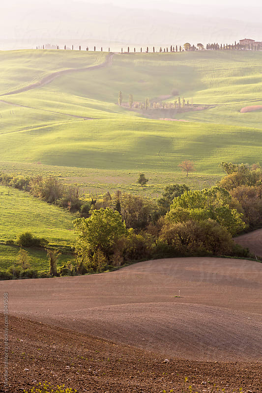 Tuscany fields early in the morning by Marilar Irastorza for Stocksy United