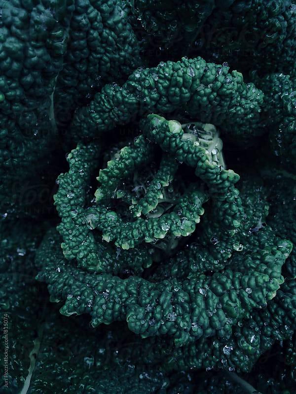 black cabbage by Juri Pozzi for Stocksy United