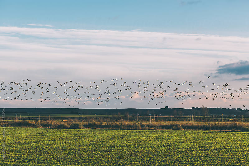 landscape with birds at dusk by Javier Pardina for Stocksy United