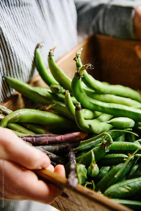 Fresh early summer vegetables being held in a wooden crate. by Helen Rushbrook for Stocksy United