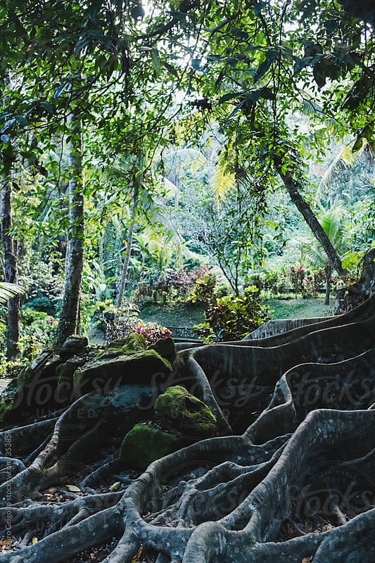 Forest in Bali, Indonesia by Mauro Grigollo for Stocksy United