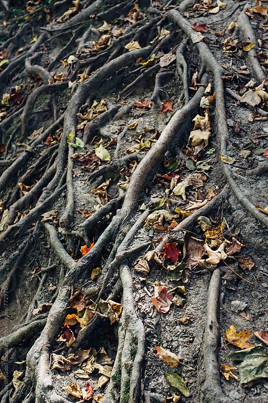 Intricate surface tree roots by Gabriel (Gabi) Bucataru for Stocksy United