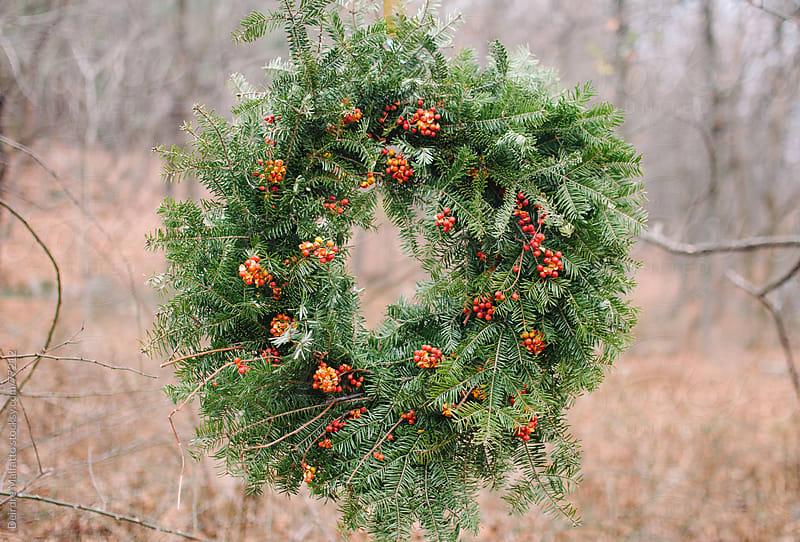 Christmas wreath hanging from a tree in the woods by Deirdre Malfatto for Stocksy United