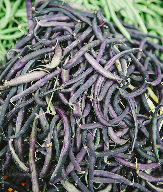 Purple beans by kkgas for Stocksy United
