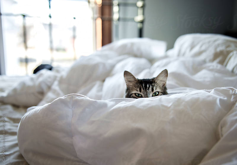 Eyes and ears of a tiger cat peek over a pile of blankets on a bed by Cara Dolan for Stocksy United