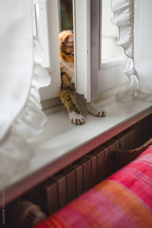 Funny cat pushing window shutter with her legs inside the window by Laura Stolfi for Stocksy United