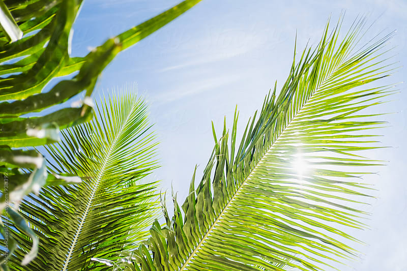 Palm tree leaves against sky by michela ravasio for Stocksy United