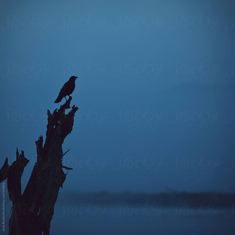 Silhouette of a bird on a overlooking a fog by Ania Boniecka for Stocksy United
