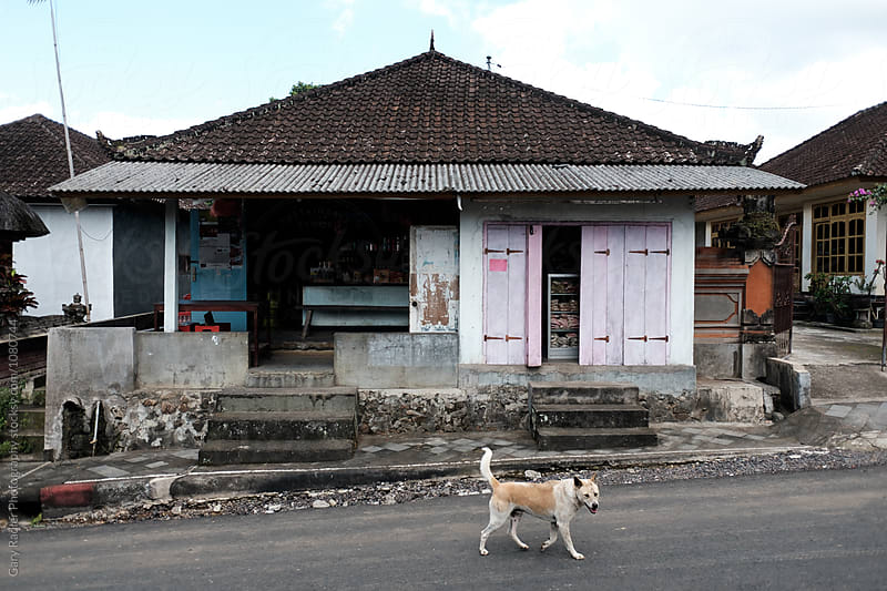 Dog walking by a Bali Shop by Gary Radler Photography for Stocksy United
