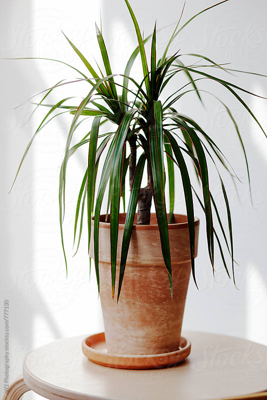 Tropical potted plants on stool in a loft by W2 Photography for Stocksy United