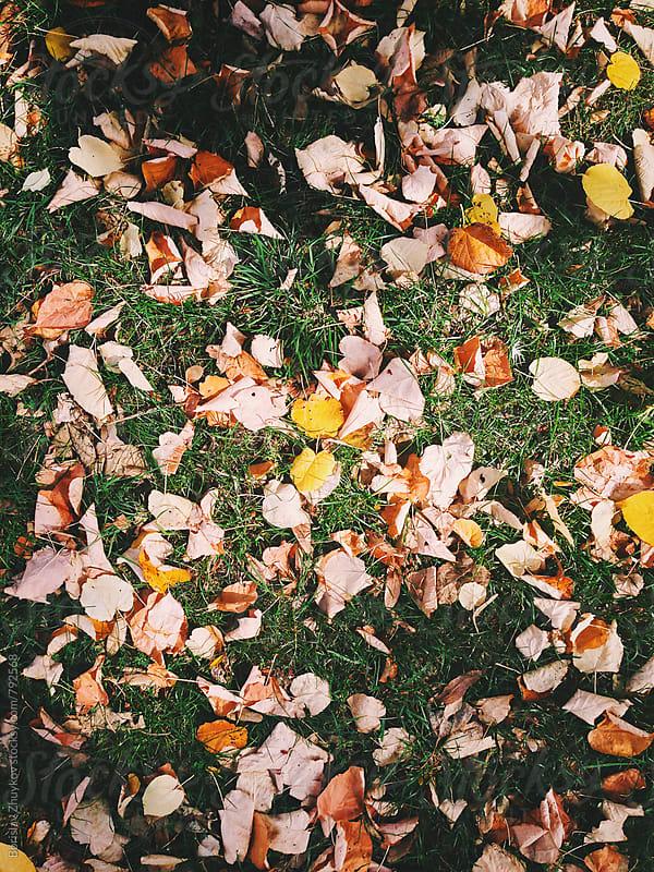 Picturing Autumn by Borislav Zhuykov for Stocksy United