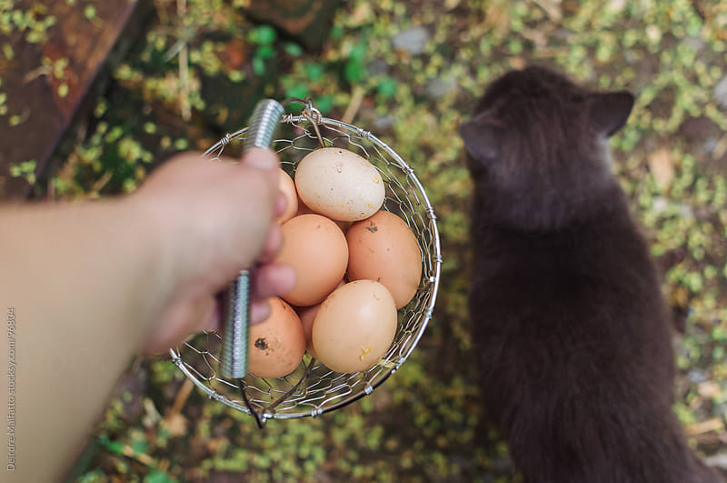 hand holding at fresh eggs in a basket with a cat by Deirdre Malfatto for Stocksy United