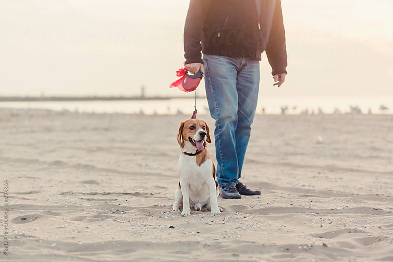 A beagle dog on a leash with a man's legs in jeans on the beach by Cindy Prins for Stocksy United