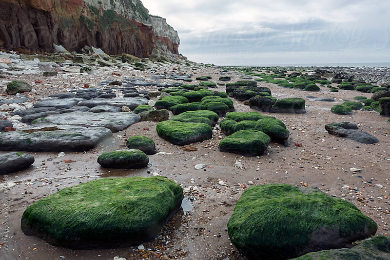 Rocks on the beach covered with seaweed by Paul Phillips for Stocksy United