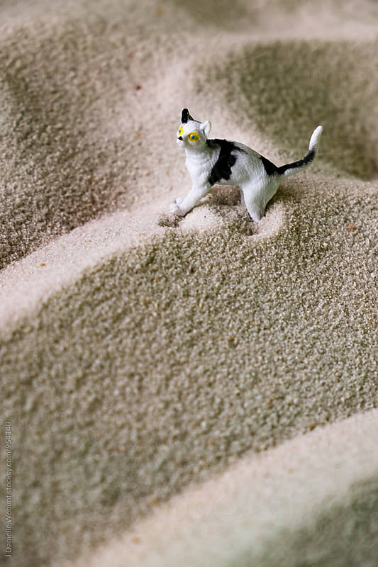Miniature Plastic Toy Cat in sand by J Danielle Wehunt for Stocksy United