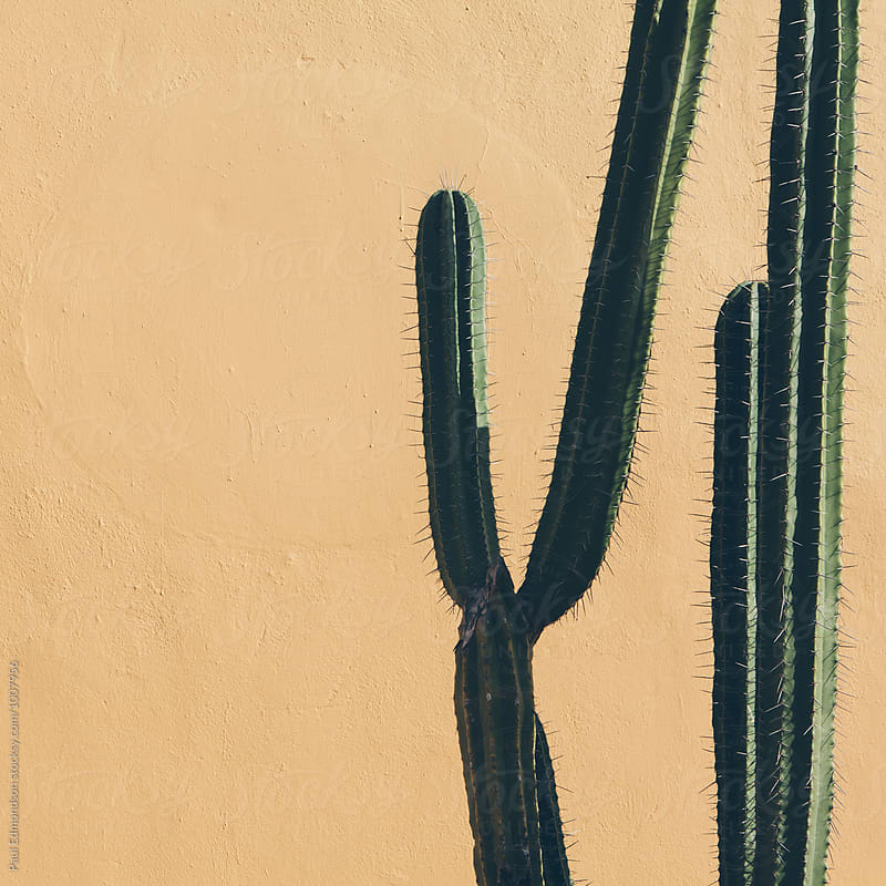 Cactus growing against adobe wall, Mexico by Paul Edmondson for Stocksy United