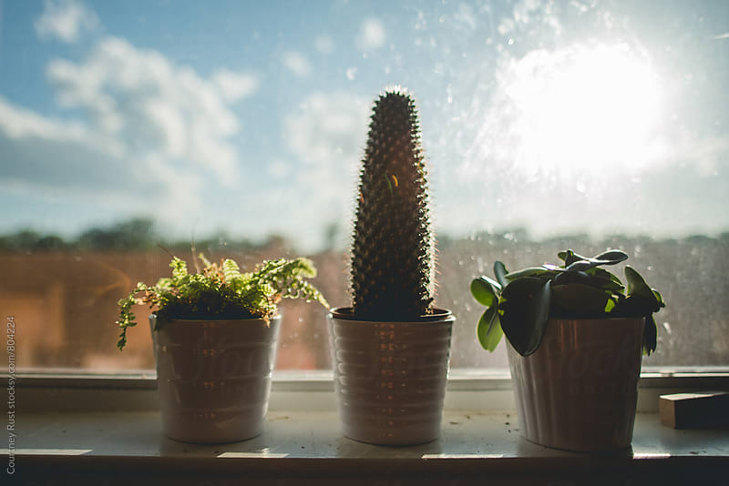 cactus on a beautiful sunny day  by Courtney Rust for Stocksy United
