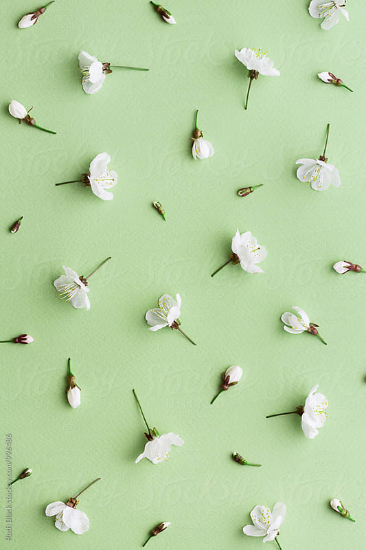 Blossom background by Ruth Black for Stocksy United