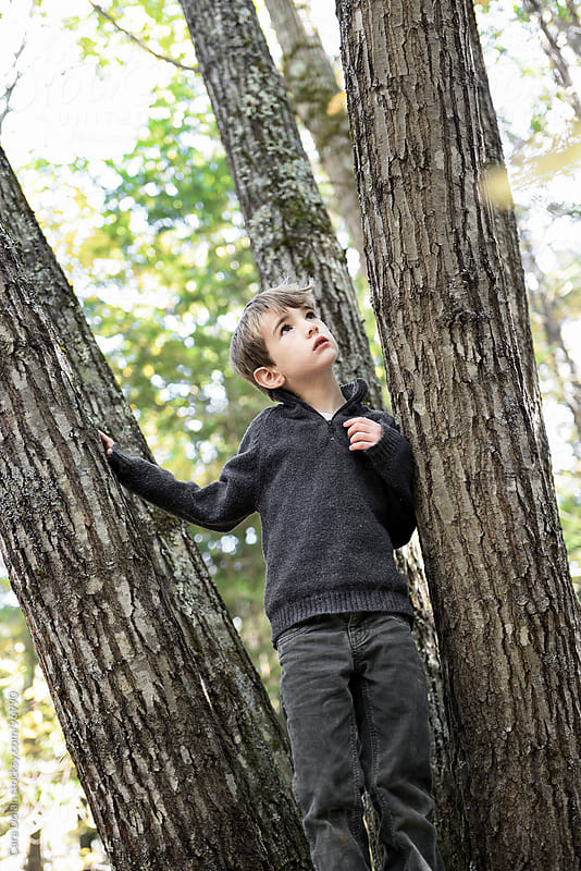 Boy stands in a forest in autumn, looking up at the trees by Cara Dolan for Stocksy United