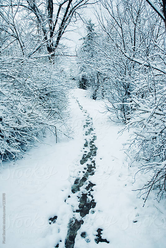 Snowy path  by Pixel Stories for Stocksy United