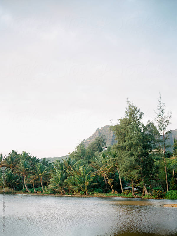 Tropical landscape by Daniel Kim Photography for Stocksy United