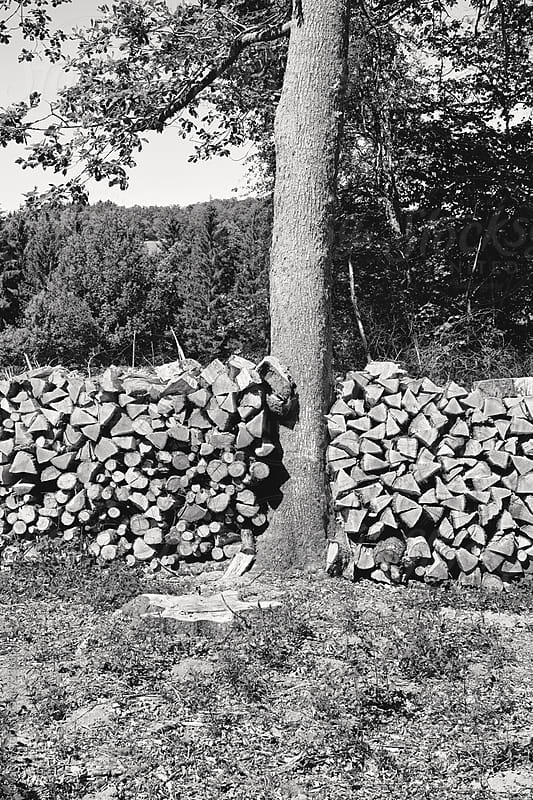 Typical firewood stack in b&w by Marcel for Stocksy United