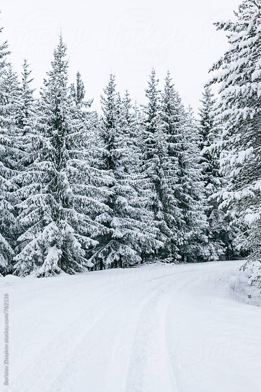 Empty road covered with snow through winter forest by Borislav Zhuykov for Stocksy United