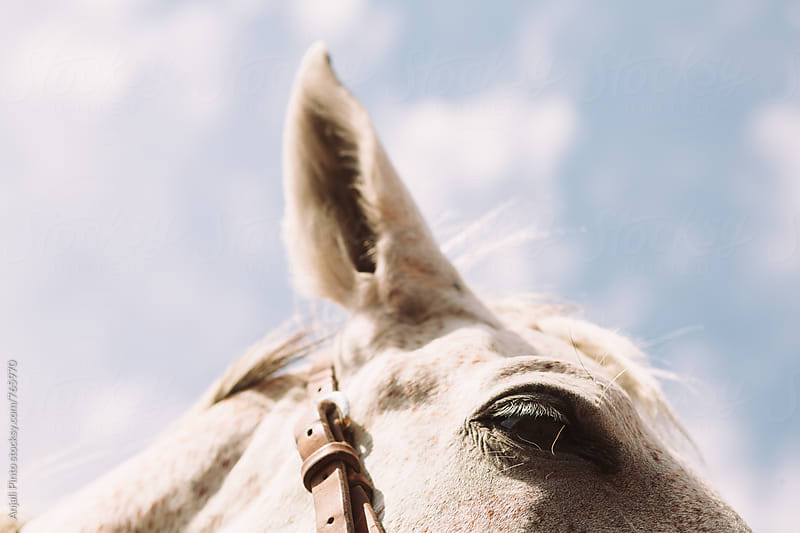 White Horse with Freckles by Anjali Pinto for Stocksy United