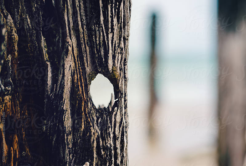 weathered timber of an old, old jetty at the beach by Gillian Vann for Stocksy United