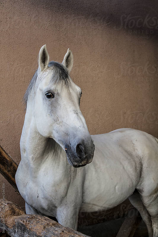 white horse on brown background by Sonja Lekovic for Stocksy United
