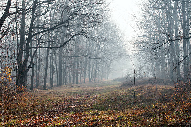 Autumn wood in the morning by Sveta SH for Stocksy United