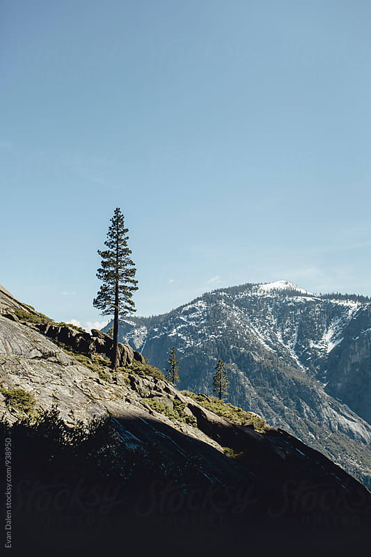 Mountainside with Tree in Yosemite by Evan Dalen for Stocksy United