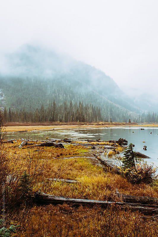 Swampy Wetlands Along Subalpine Forest Lake In Mountains by Luke Mattson for Stocksy United