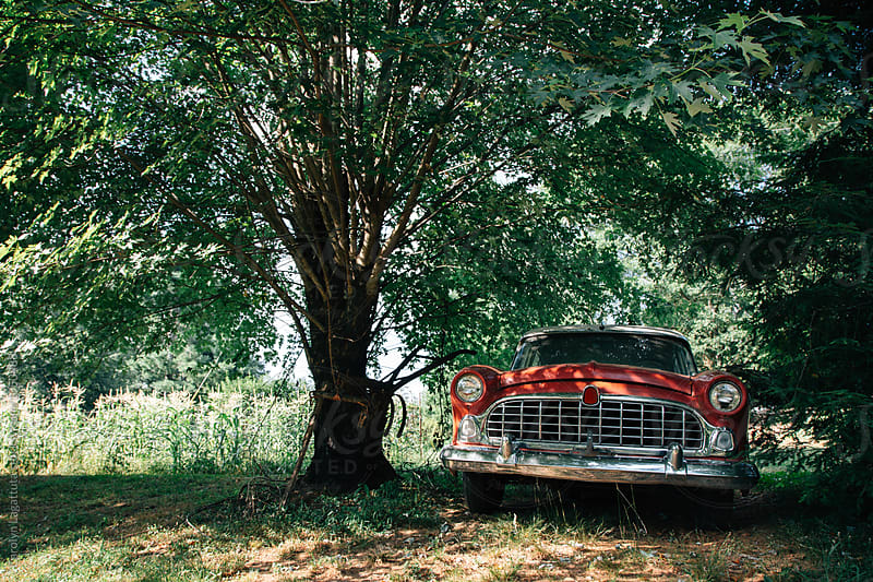 Vintage car under a big tree by Carolyn Lagattuta for Stocksy United