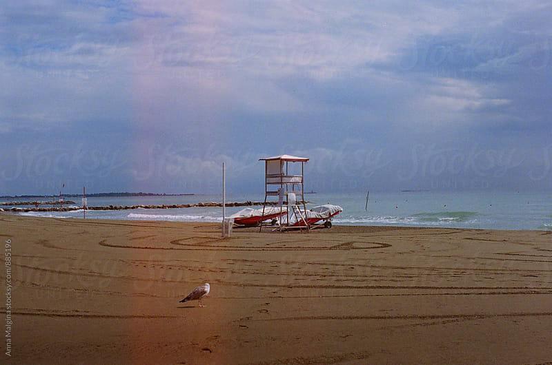 A film photo of a lonenly seagull on empty Venice beach by Anna Malgina for Stocksy United