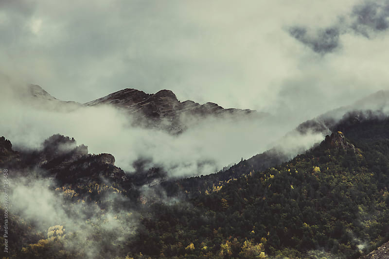 fog between the trees by Javier Pardina for Stocksy United