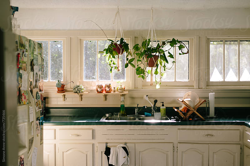 Kitchen with plants by Simone Anne for Stocksy United