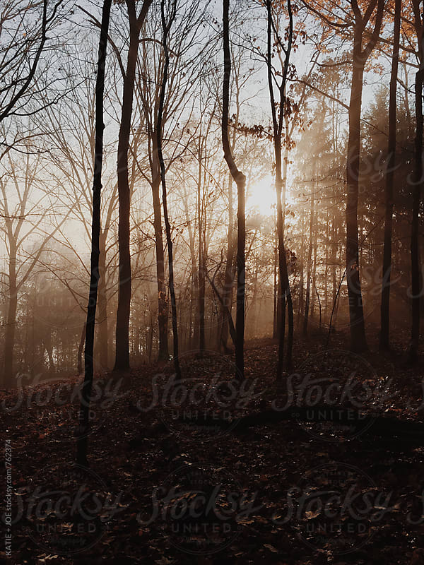 Foggy autumnal forest at sunrise by KATIE + JOE for Stocksy United