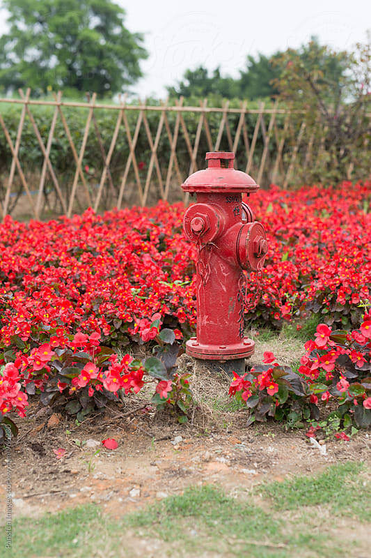 fire hydrant in flower garden by Xunbin Pan for Stocksy United