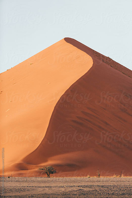 Giant desert sand dune in the Namib desert with a small tree in front,  by Micky Wiswedel for Stocksy United
