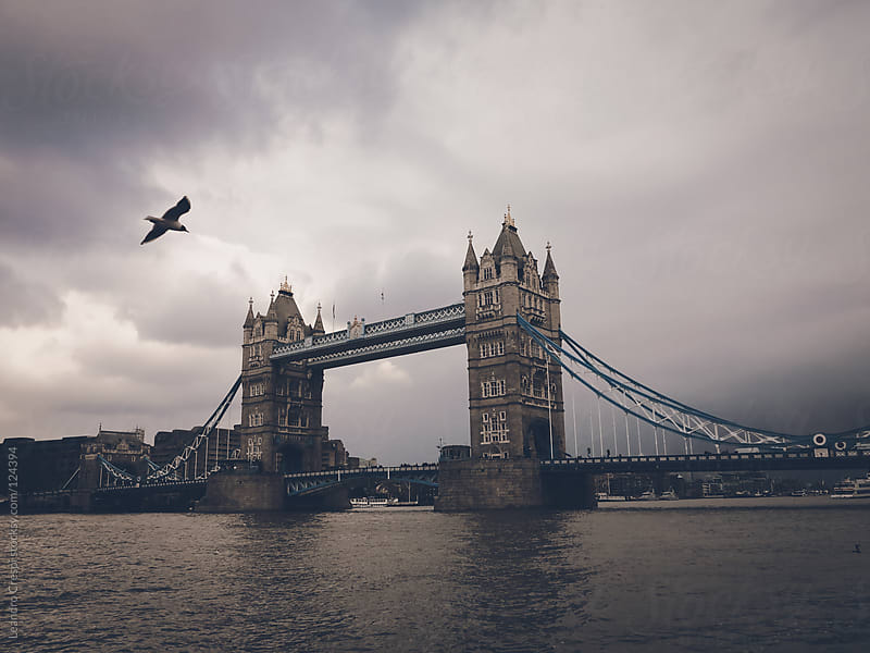 Tower bridge view with seagull by Leandro Crespi for Stocksy United