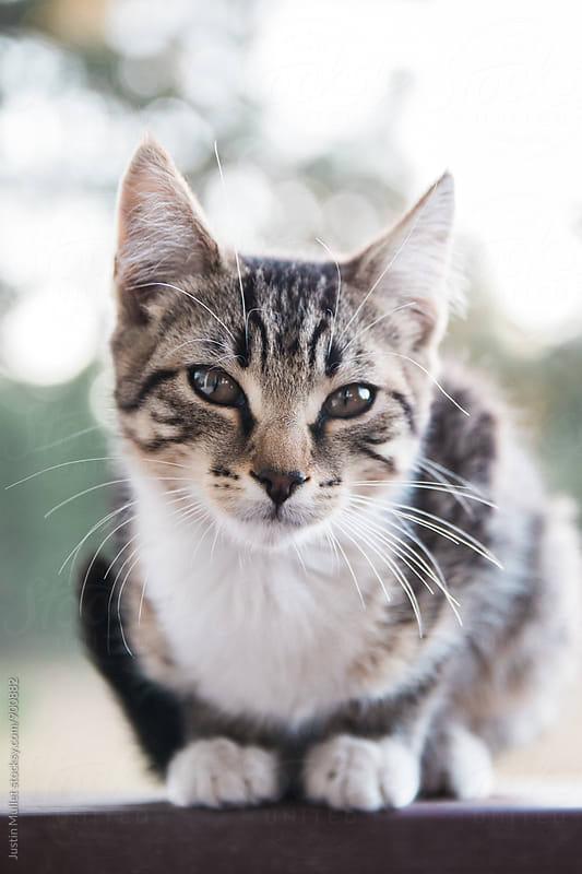 Kitten by Justin Mullet for Stocksy United