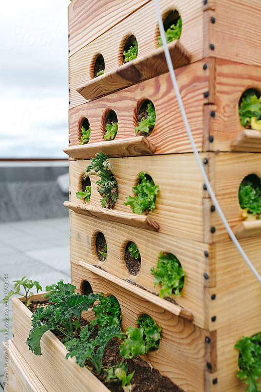Rooftop urban gardening by Rob and Julia Campbell for Stocksy United