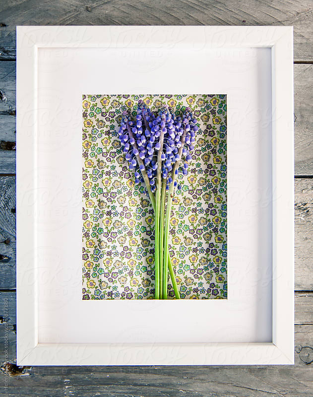 Grape Hyacinths and pretty fabric in a white frame by Helen Rushbrook for Stocksy United