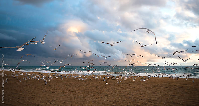 Seagulls flock together and take flight by Emmanuel Hidalgo for Stocksy United