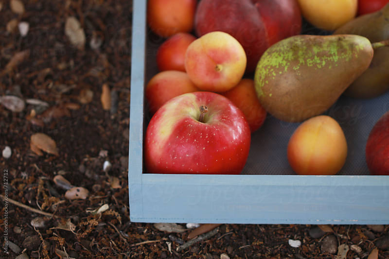 Close up of a wood tray with fresh fruit  by Miquel Llonch for Stocksy United