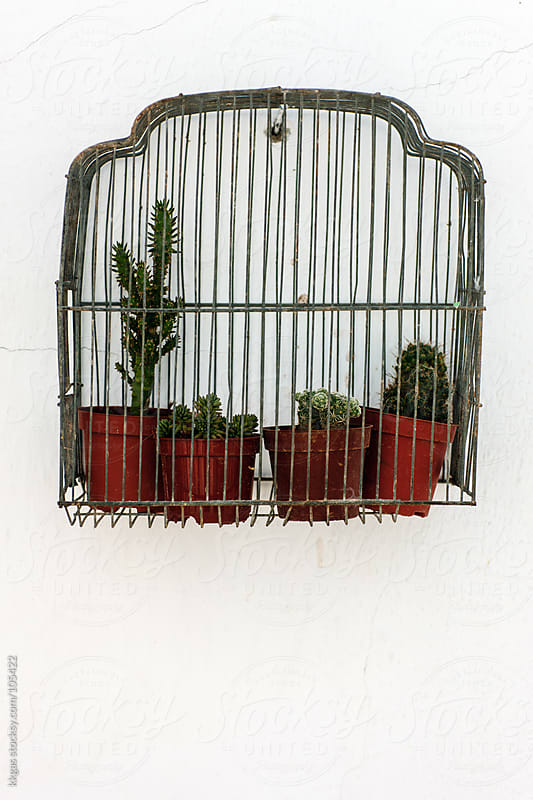 Cactus plants inside a birdcage by kkgas for Stocksy United